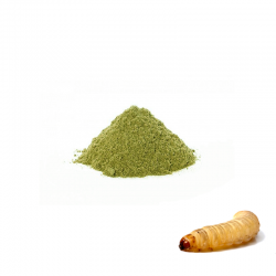 Alimento para Larvas da Cera