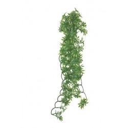 Papaya Leaf Vine