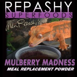 Crested Gecko MRP Mulberry...