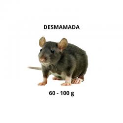 Ratazana - Desmamada